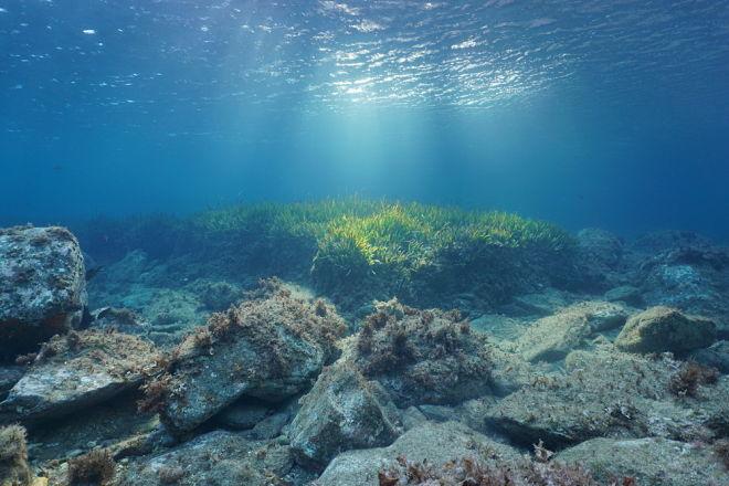 Седат Игдеджи - Великобритании посоветовали активизировать усилия по защите океанов и морской флоры и фауны